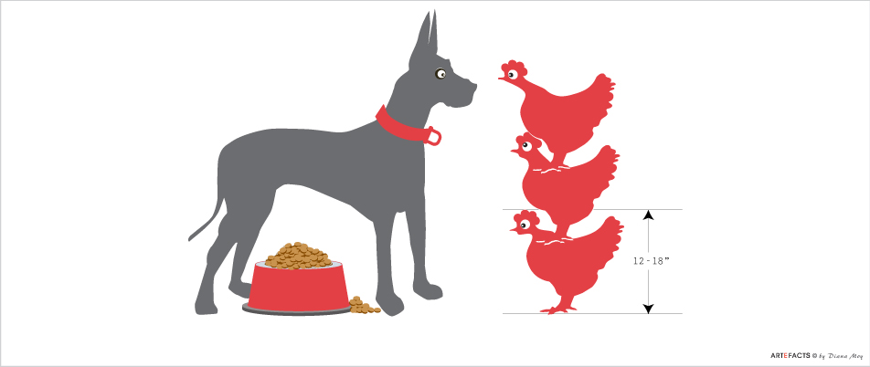 Great Dane & Chicken