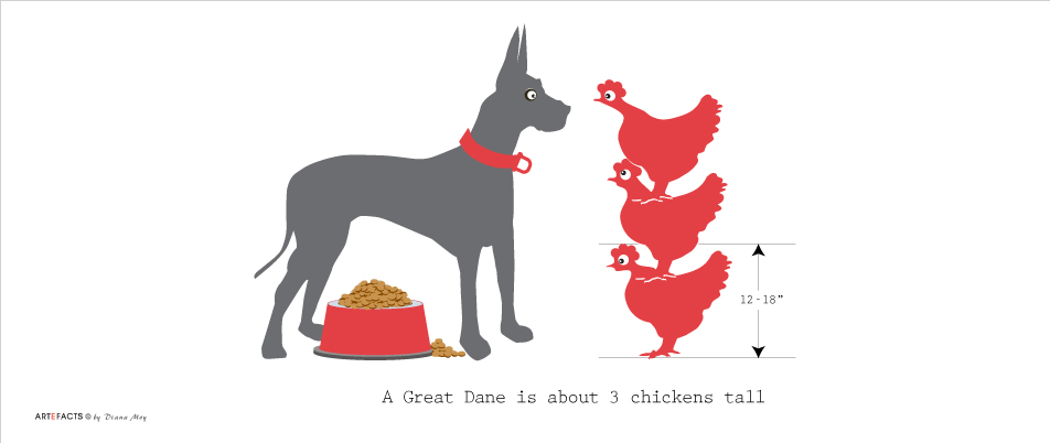Great Dane & Chicken